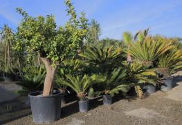 Pepinieres-le-lestin-location-plantes
